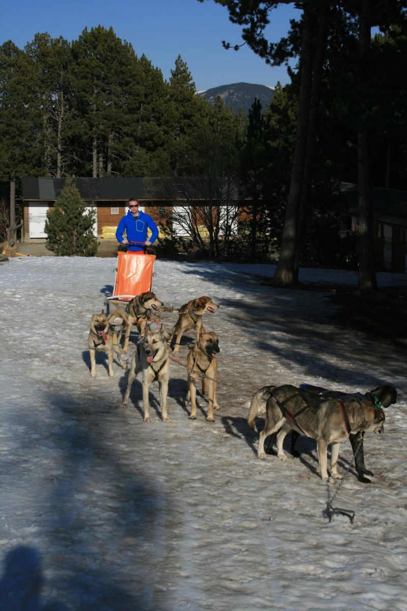 Dog sledding in Andorra in the Quechua Bionnassay Softshell