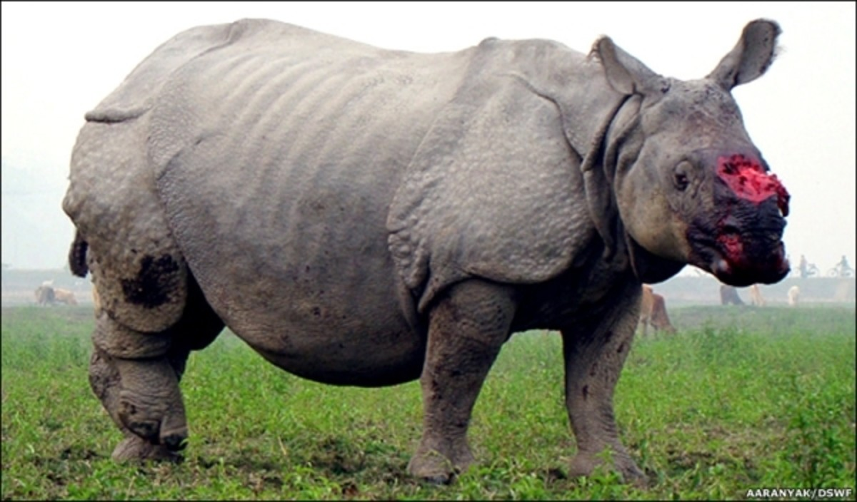 Animal cruelty: Rhino horn poaching in Africa