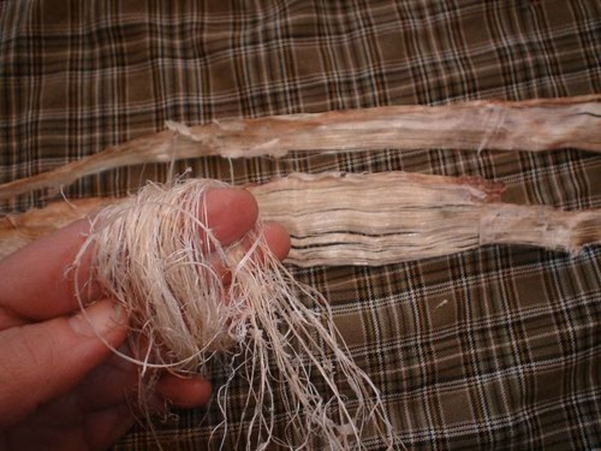 Deer backstrap sinew preparation