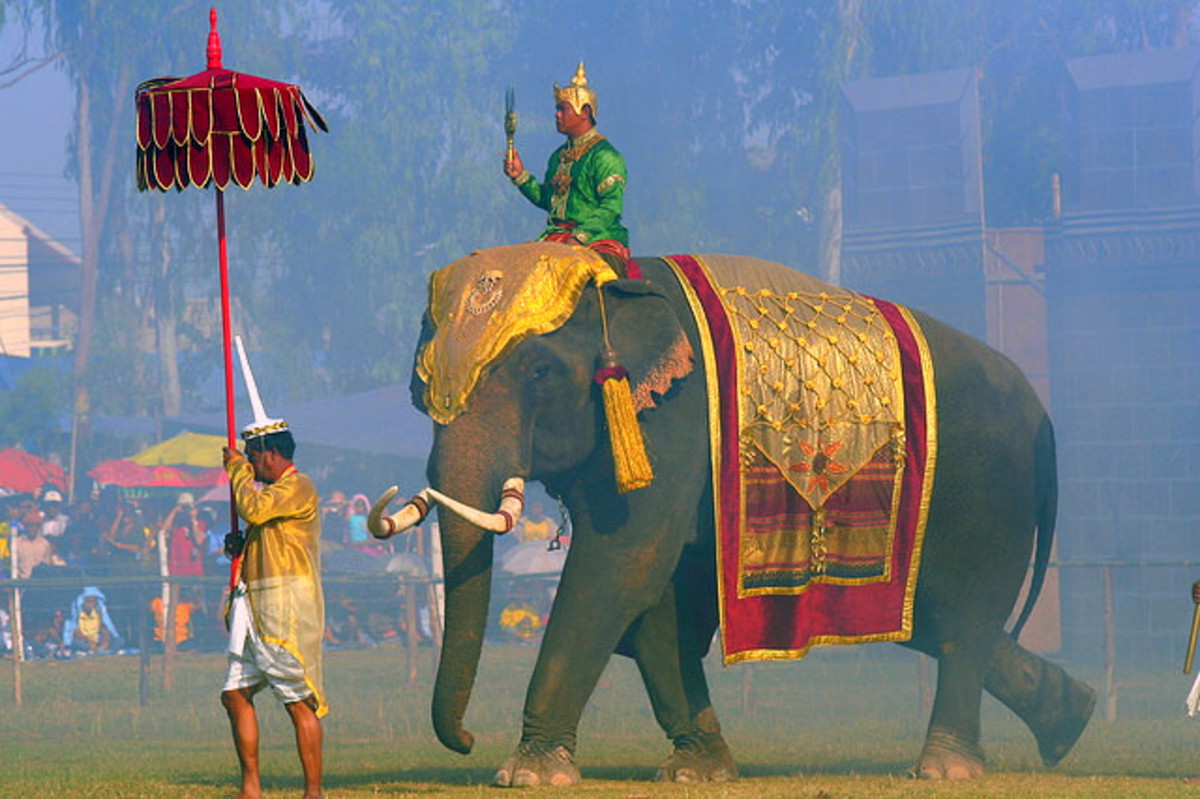 Leading the procession during Surin Elephant Round Up