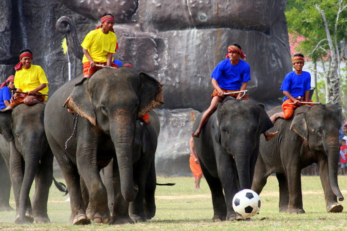 Elephant Soccer at Surin Elephant Round Up