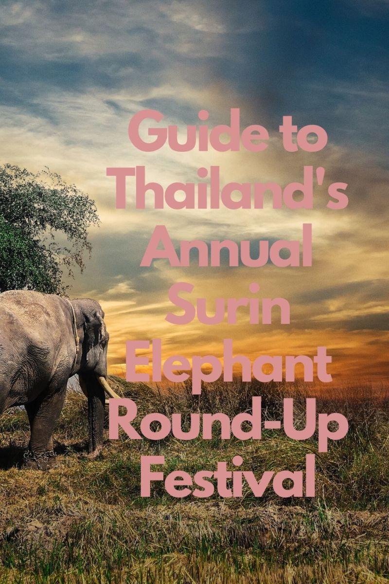 thailands-annual-surin-elephant-round-up