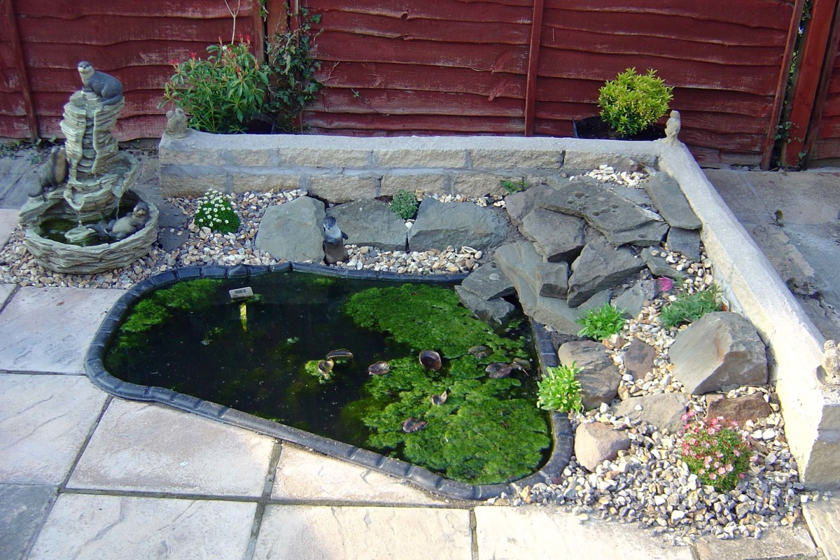 A modified version of our wildlife pond