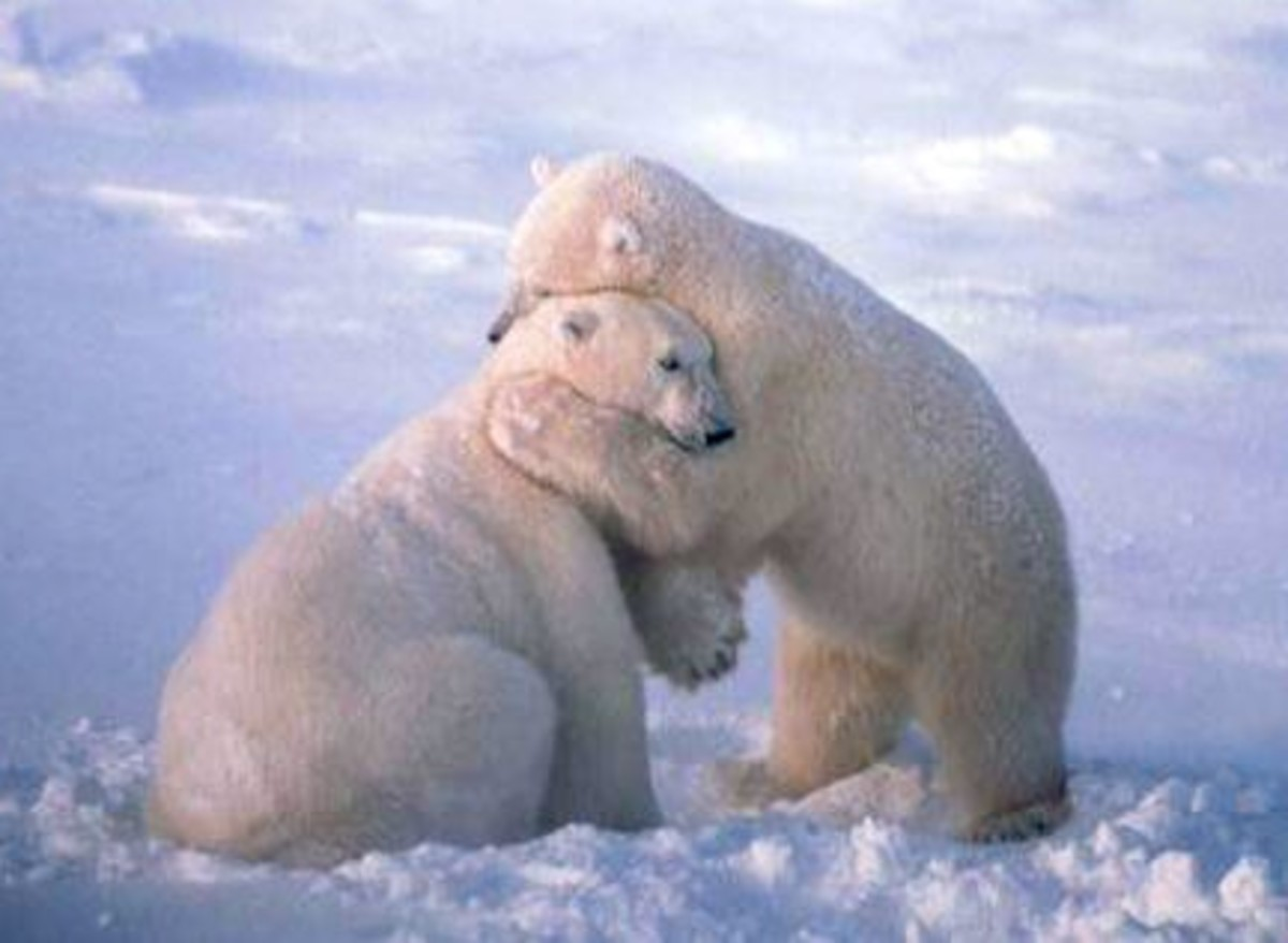 I love you. How about a great big bear hug.