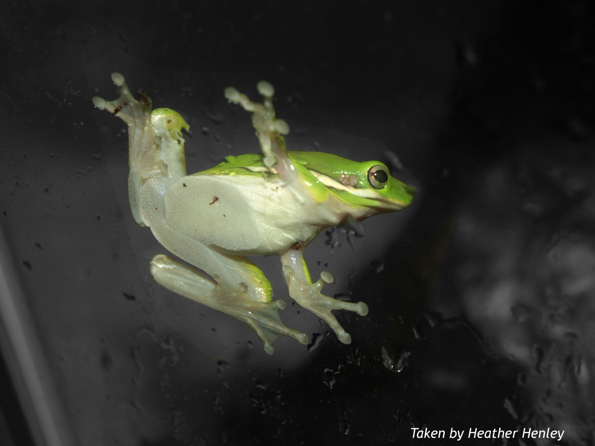 how-to-keep-a-pet-frog-happy