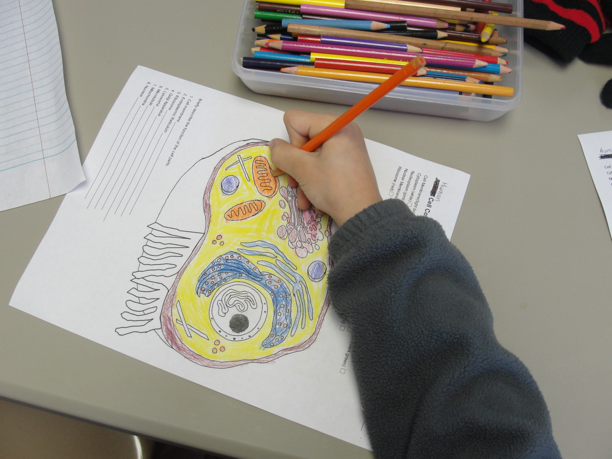 Coloring in the parts of the cells as we discuss each part and its function