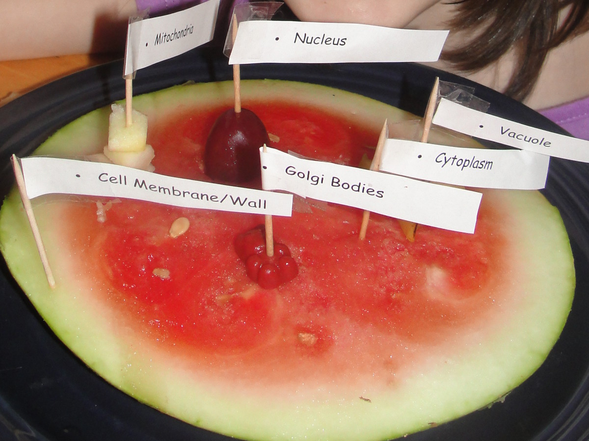 Edible cell model we made using fruit, which is an option if you'd prefer to avoid using candy