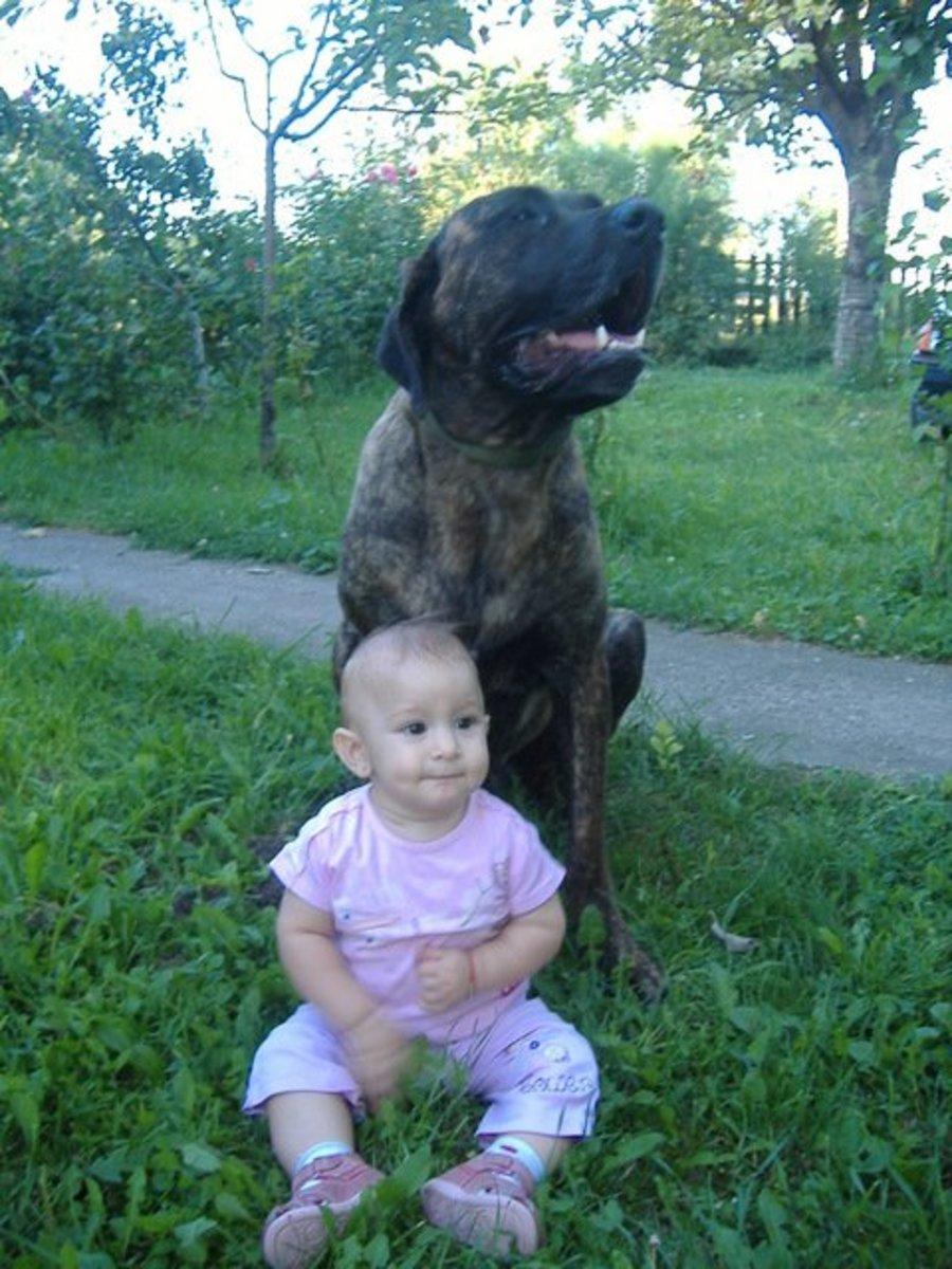 the-serbian-defense-dog