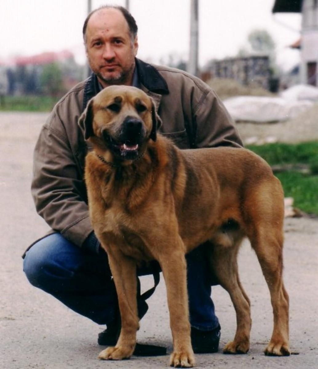 The Serbian Defense Dog and Its Creator, Nenad Gavrilovic