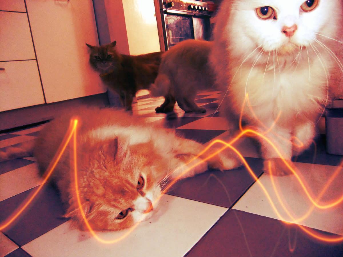 Photo 4.2 - Pixlr-o-matic ivan+beep effect