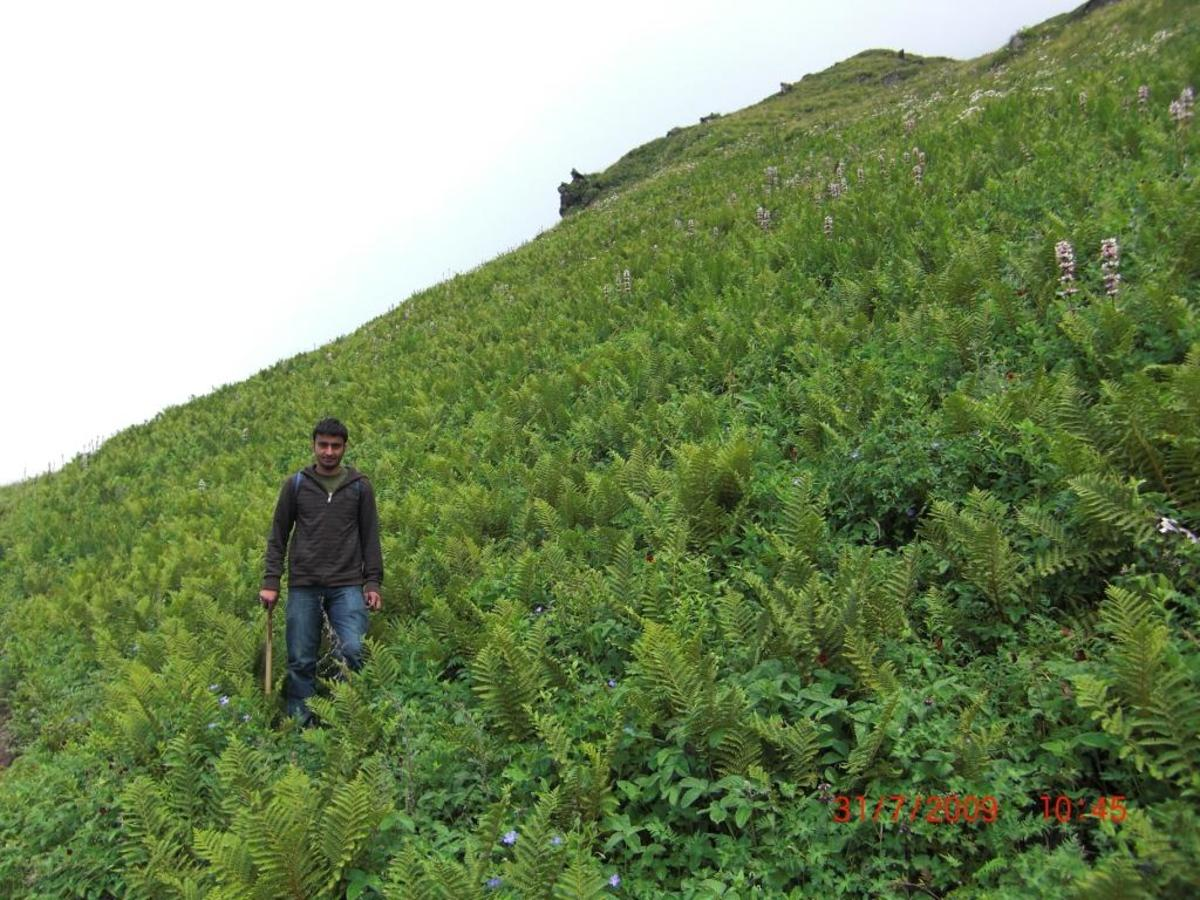 Healthy environment of a hill station. You can use this image after giving a clickable link to this article from your resource.