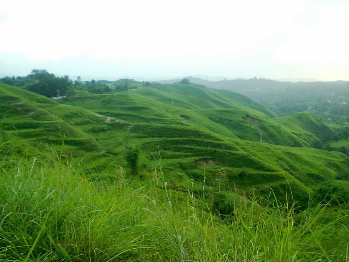 Lush greenery of a hill station. You can use this image only after giving a clickable link to this article.