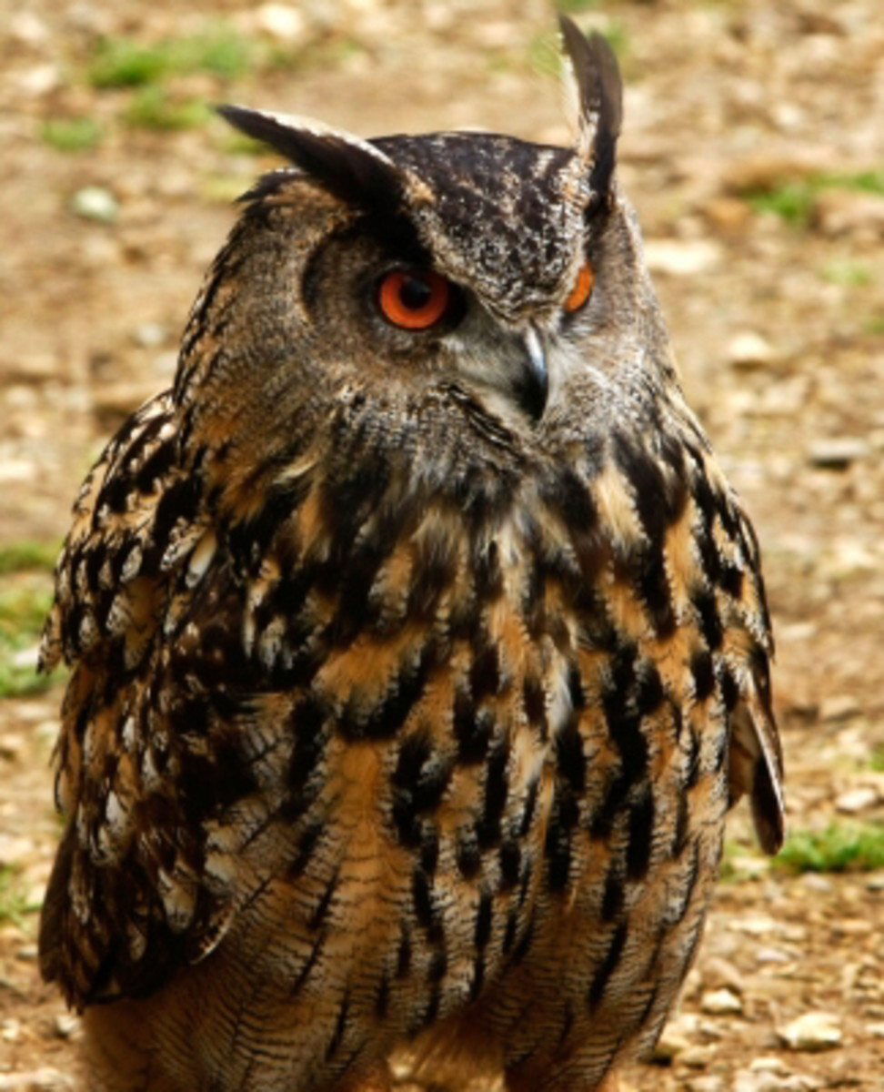 """Owl is symbolically associated with clairvoyance, astral projection, and magic"""