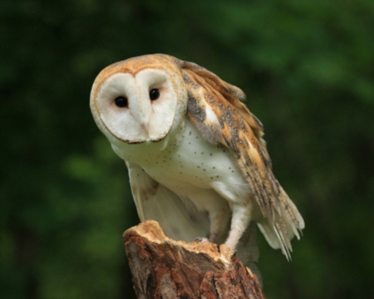 """Messages from the Owl are deep, far reaching and complex"""