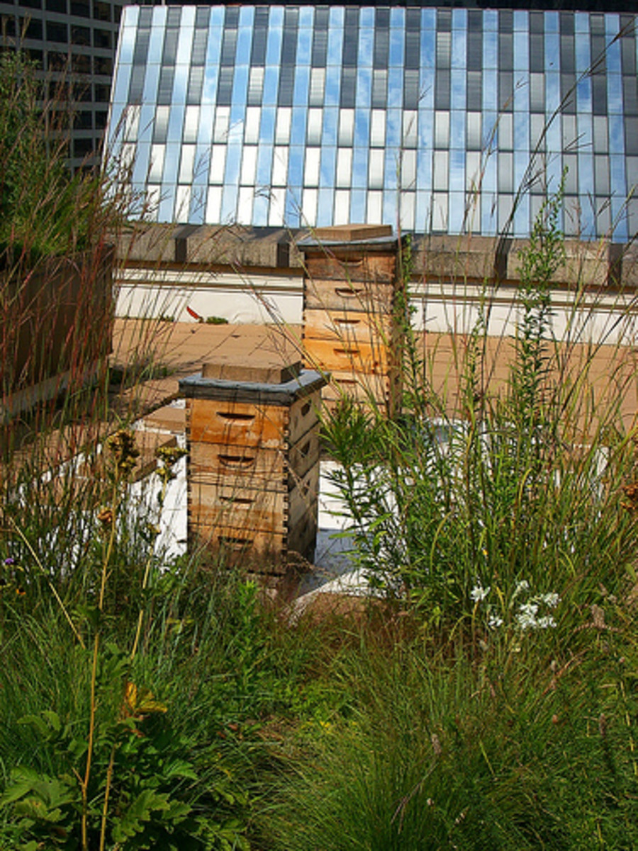 Urban Beekeeping For Beginners