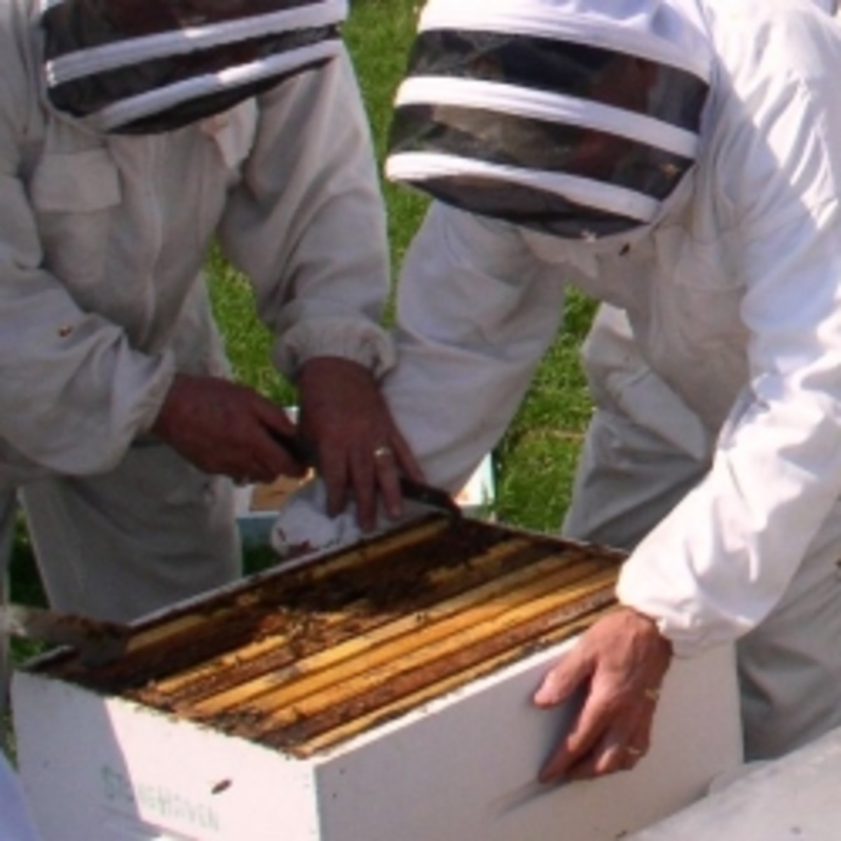Spring Beekeeping Field Day, photo used here by permission of the photographer