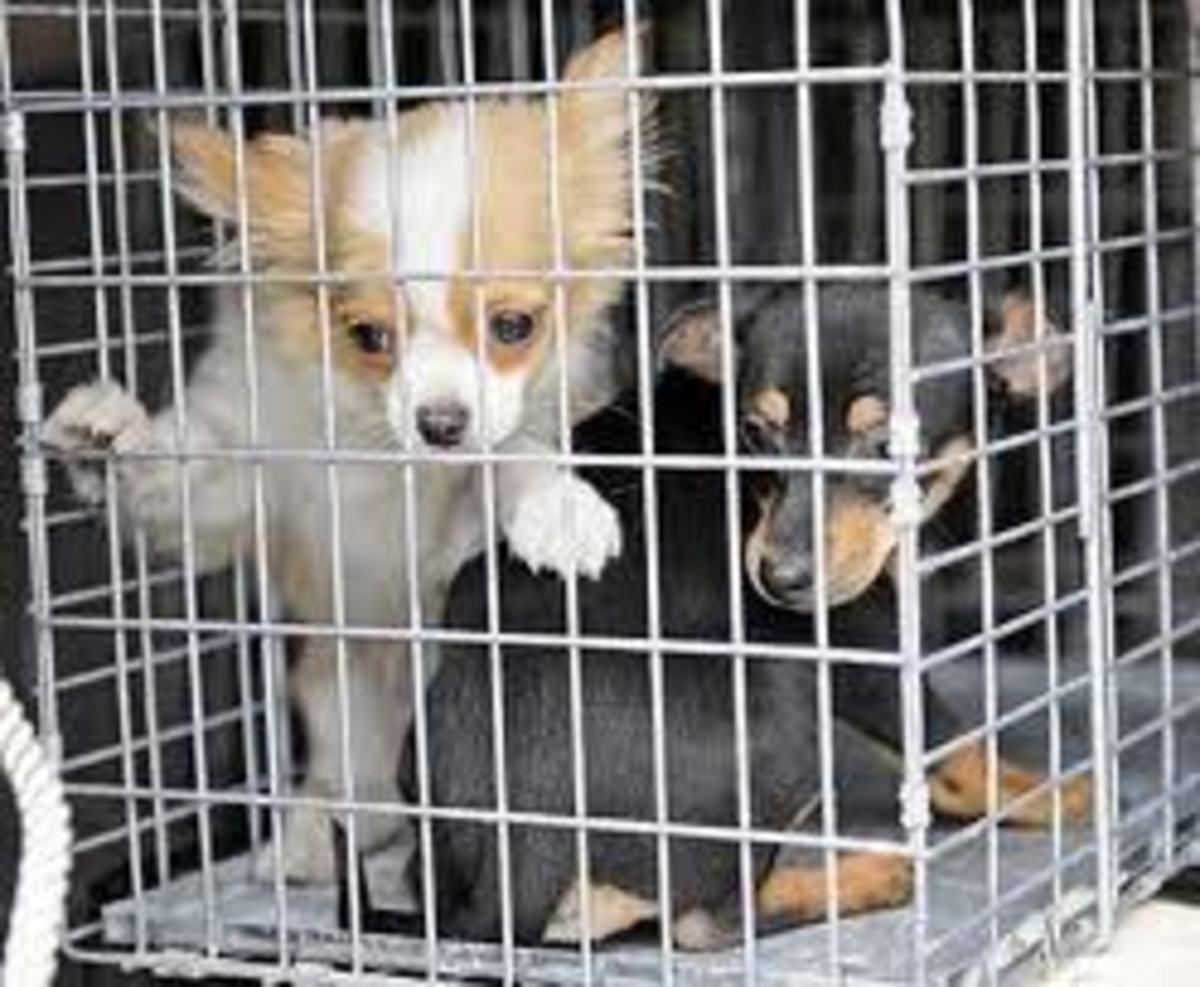 wal-mart-puppies