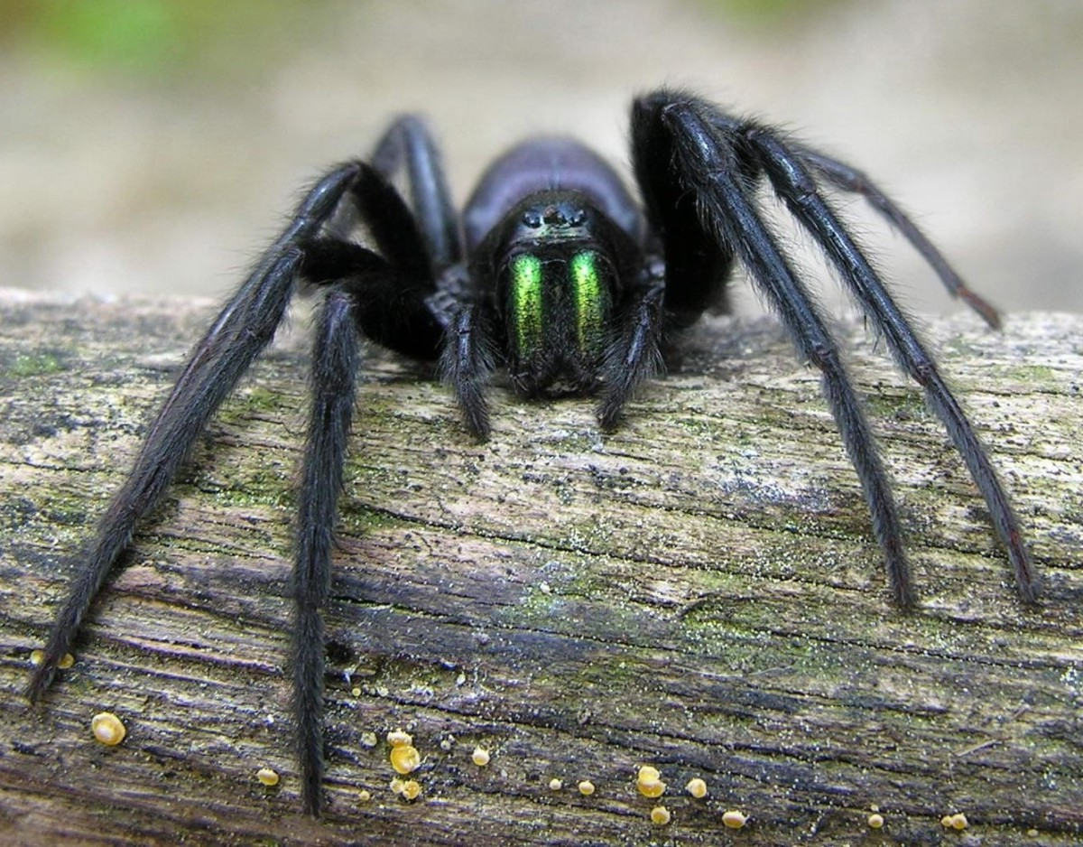 The Evolution of Spiders and Their Remarkable Adaptations