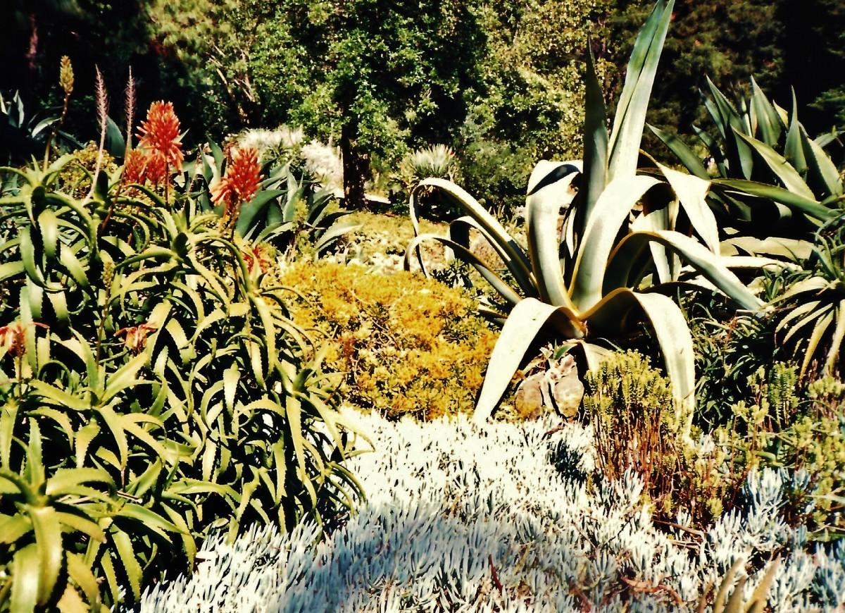 Strybing Arboretum Photos