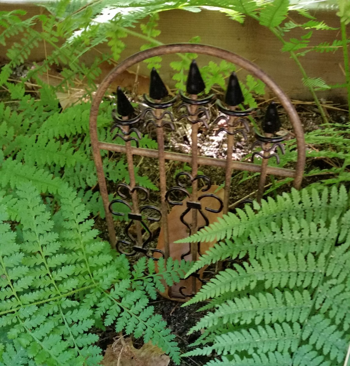 I transplanted some ferns from my woods for my mini-garden. They frame this metal gate perfectly. It is about 6 inches high. At any moment, I expect a wood nymph to open the gate and stroll into my ferny garden.