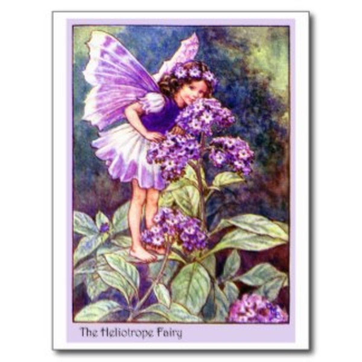 A sweet heliotrope fairy enjoying the garden. I love these vintage graphics. They help me imagine the flower fairies stopping by to see what I've done lately with my tiny garden.