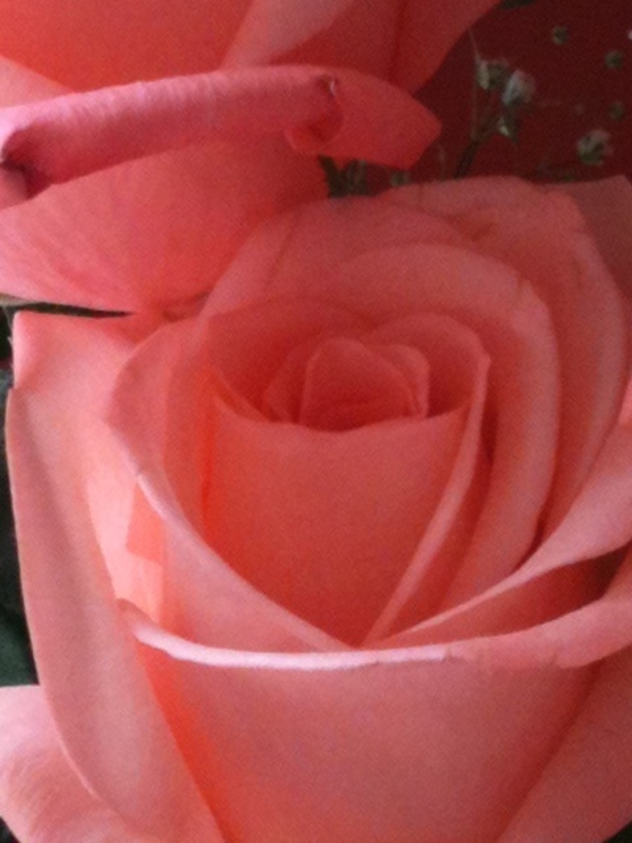 Readily available as an essential oil, it's wonderful to inhale the relaxing and romantic scent of roses in the home.