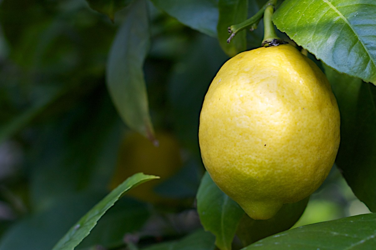 The citrus scent found in lemons is often associated with cleanliness.