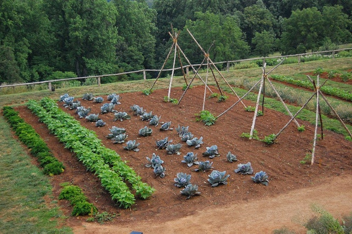 a weed free vegetable allotment