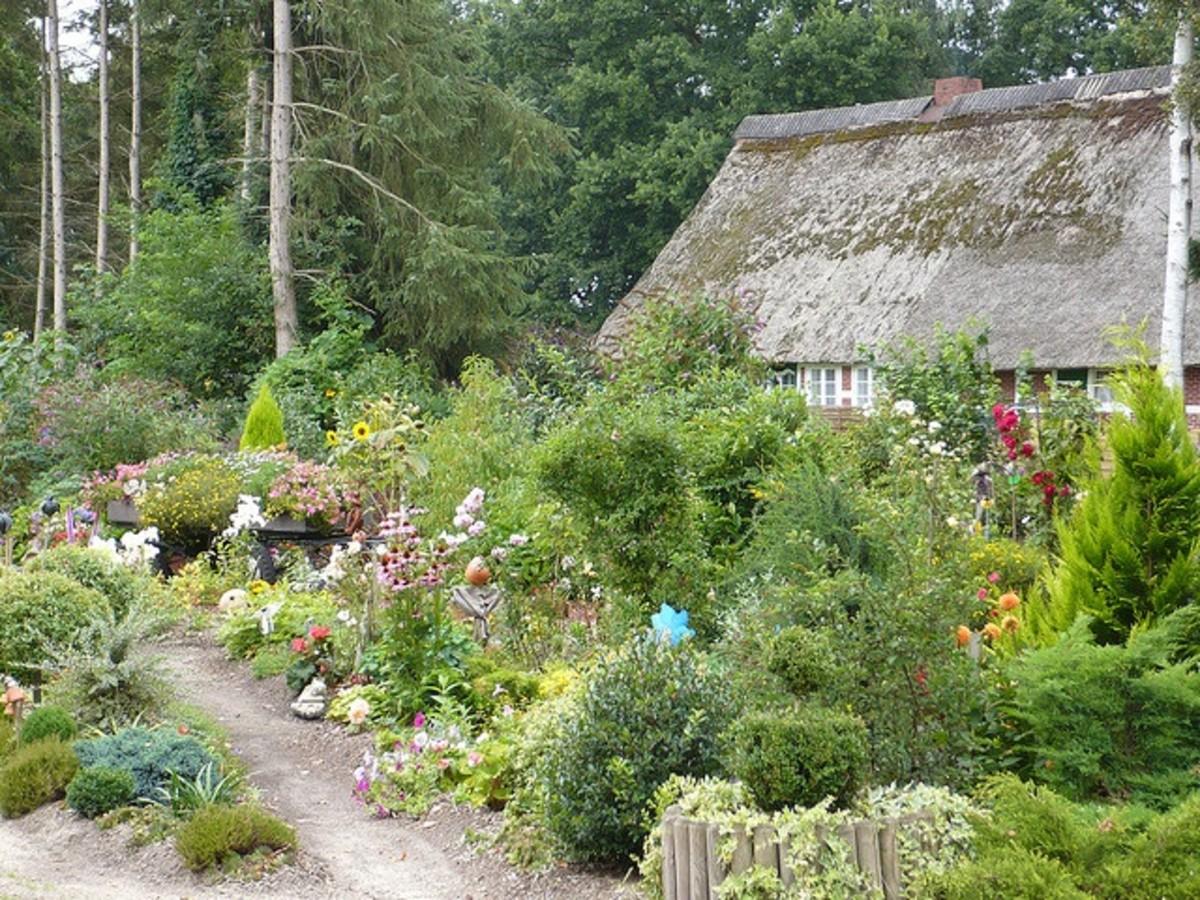 an amazing garden