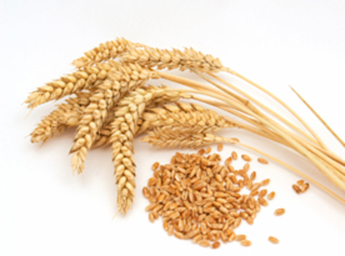 Wheat Germ & Female Hormones