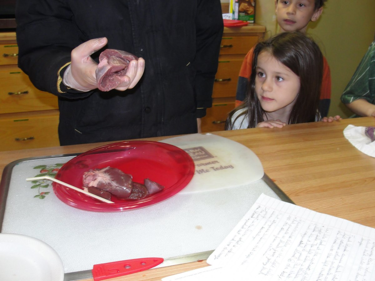 Exploring the heart after the dissection