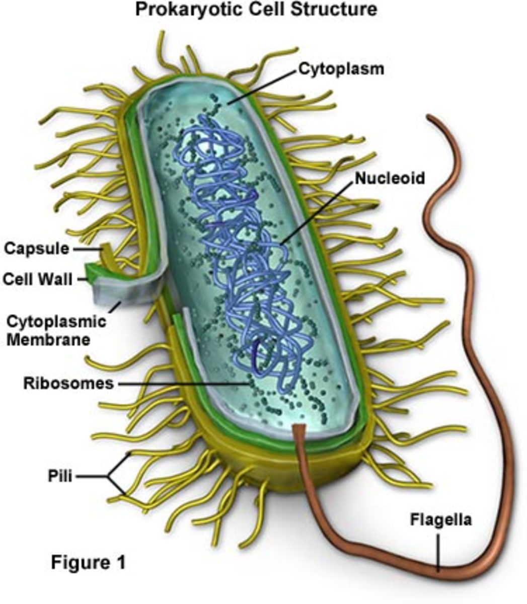 Bacterial Intracellular Structures That Give Bacteria/Prokaryotes an Advanatage!