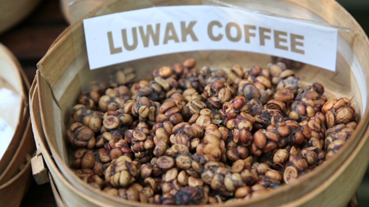 Luwak Coffee on sale in Indonesia