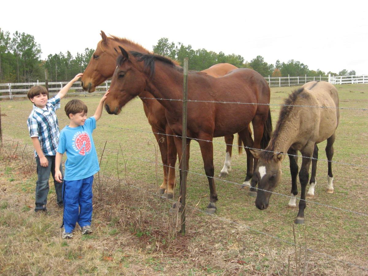 Nice horsie!