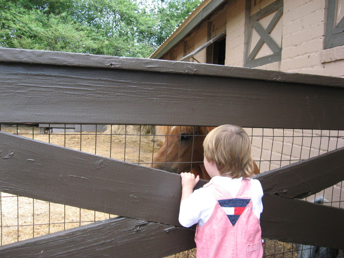 Tristan visits with a pony in the paddock.