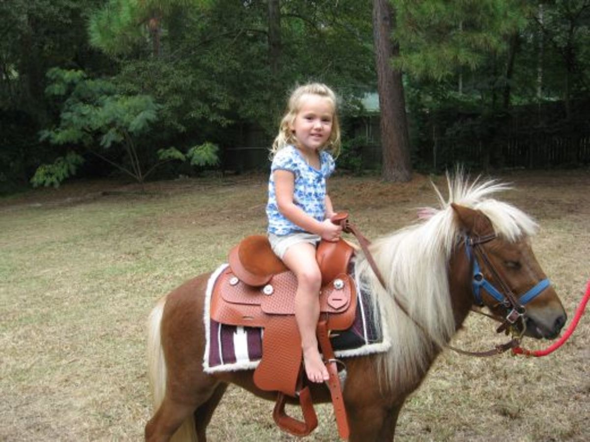 Audrie feels safe in this saddle.