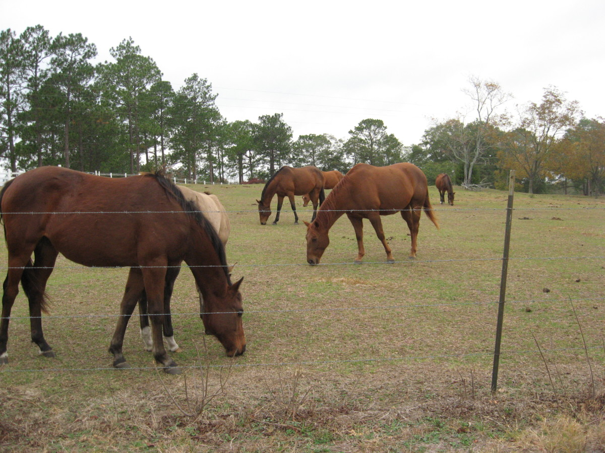 Horses benefit from grazing.