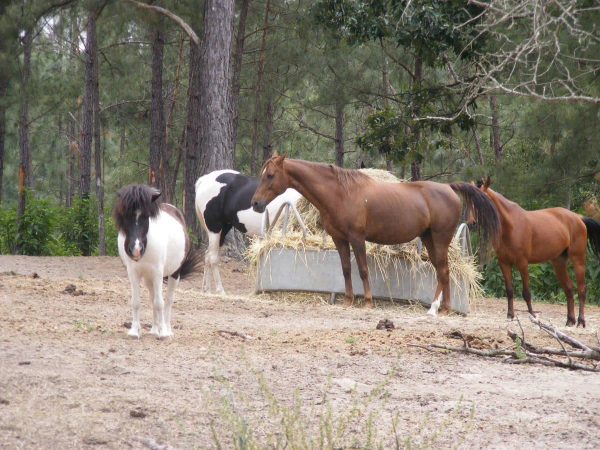 Horses eat A LOT!