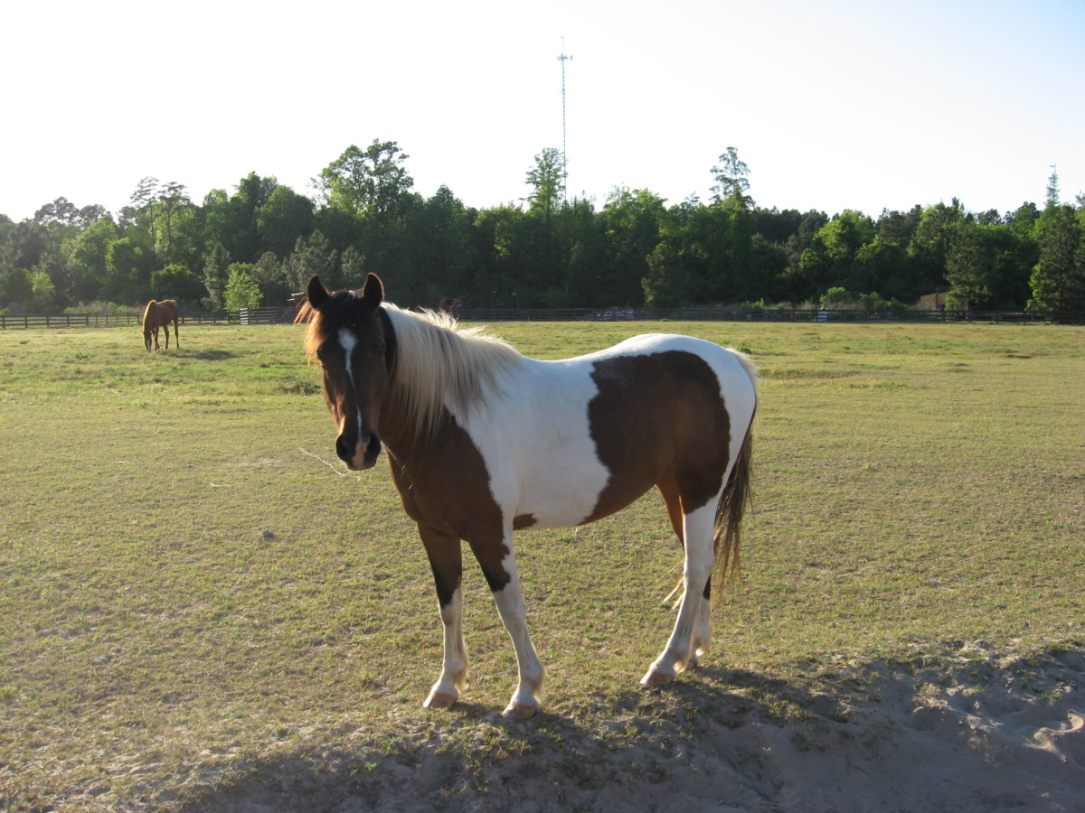 Horses like grazing and prefer some room to roam.