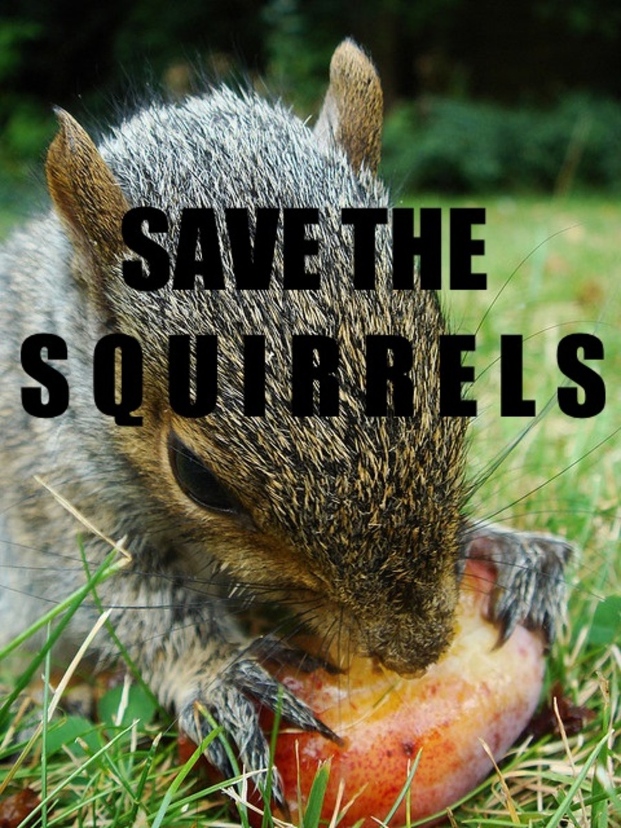 Odd Squirrel Behavior? You Could Have An Orphaned Baby ...