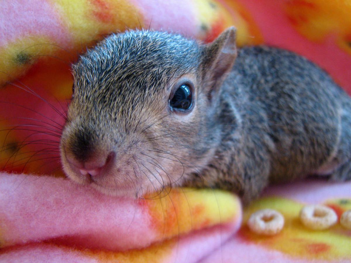 Keep the baby squirrel warm.