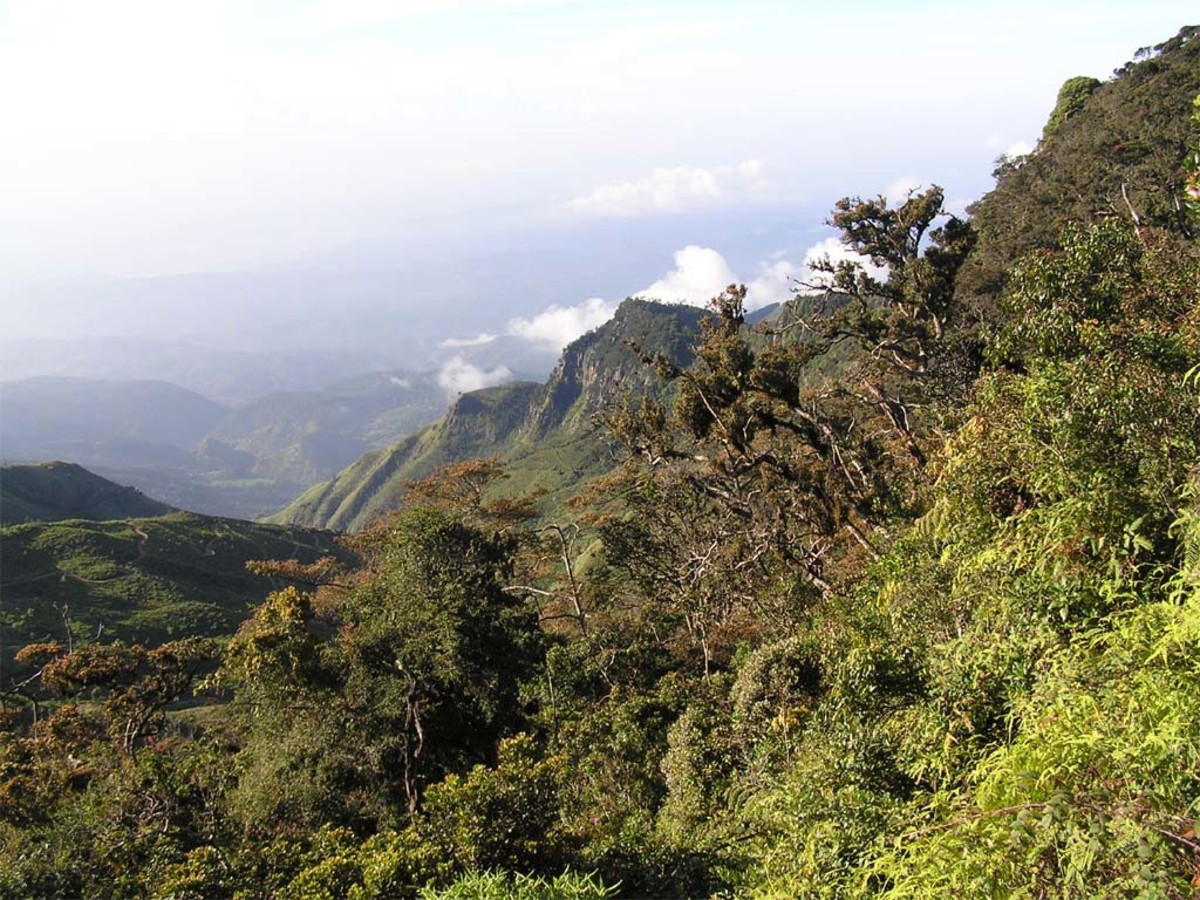 Mountain forest srilanka.jayant ~ Creative Commons ~ See: http://en.wikipedia.org/wiki/File:Srilankamountainforest.jpg