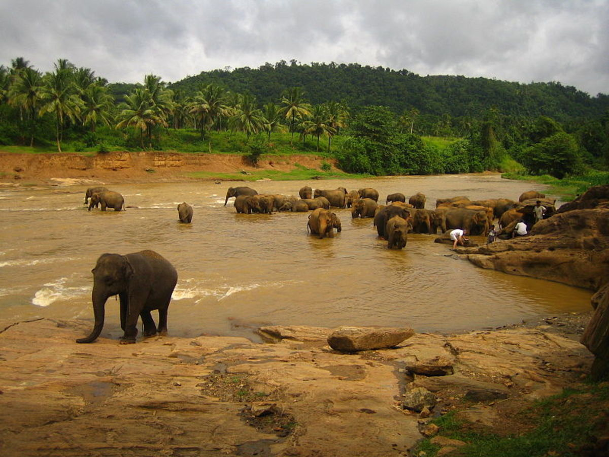 'Licensed under the Creative Commons Attribution-Share Alike 2.0 Generic license.' See: http://commons.wikimedia.org/wiki/File:Elephants_at_the_river,_Sri_Lanka.jpg