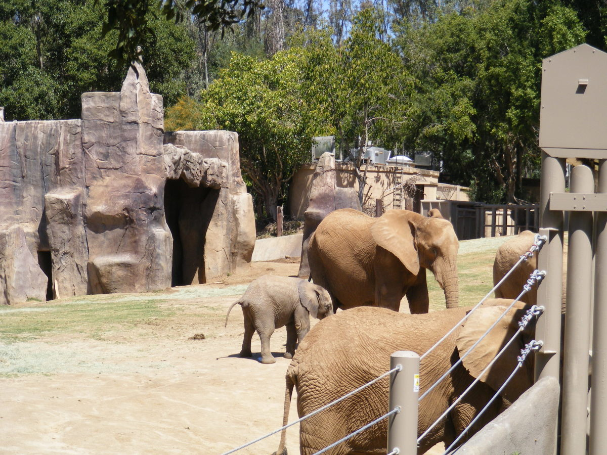 Elephants at the Safari Park