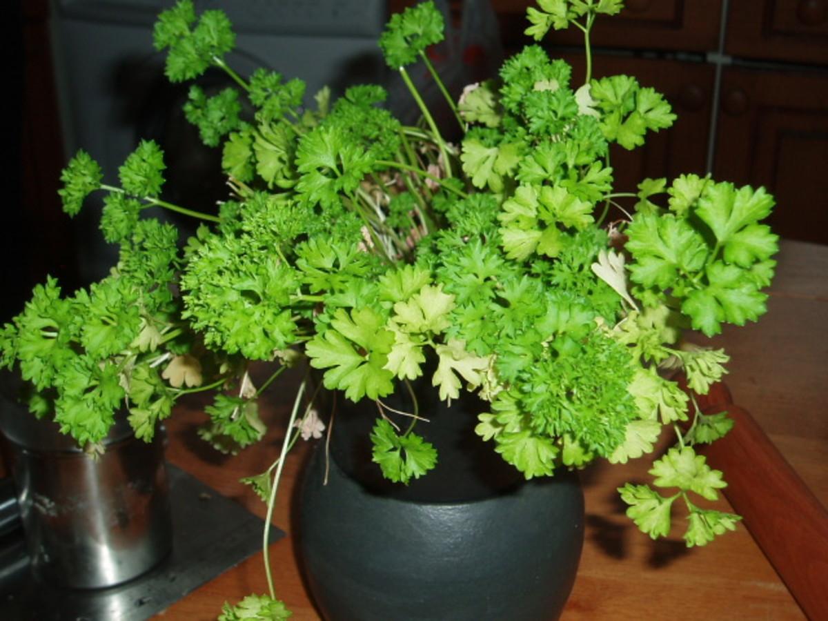 my-windowsill-herbs