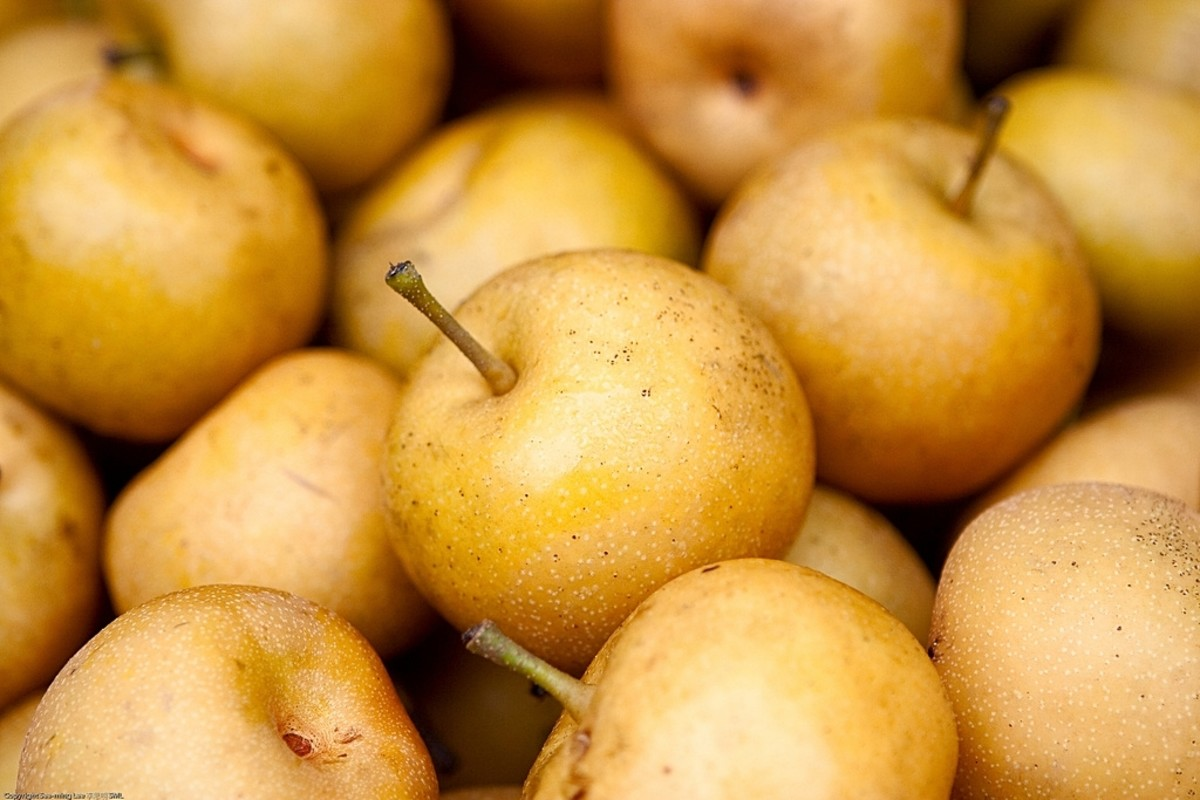 Health Benefits of Asian Pear – Fruit Worthy as Gift