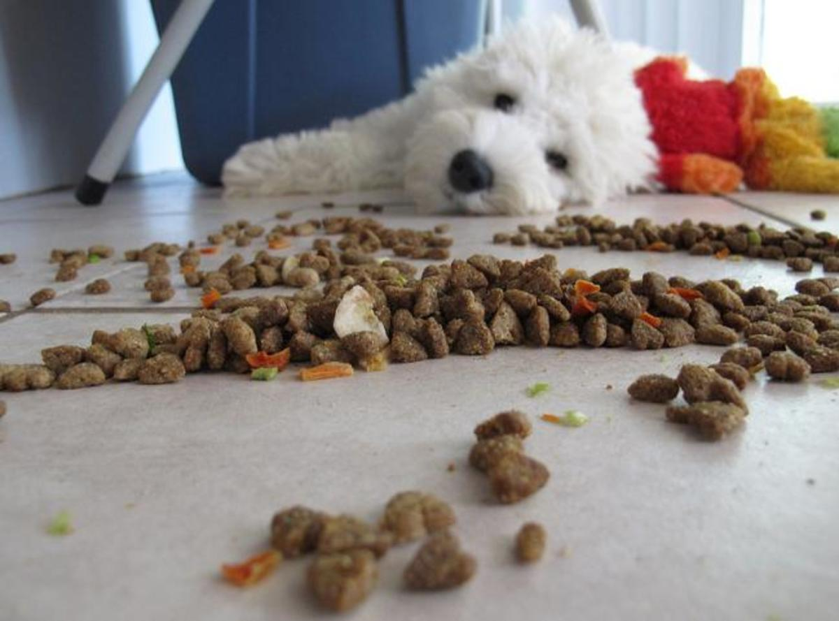 Does your dog often refuse to eat?