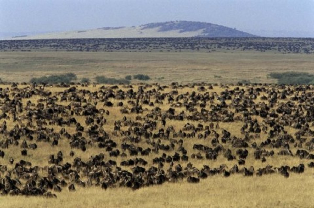 Maasai range lands have been converted to national parks and modern conservation areas.