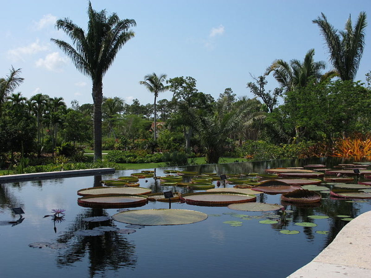 Consisting of 170 acres of cultivated gardens and preservation land, the Naples Botanical Garden represents seven ecosystems and has over 1,000 different species.  Founded in the early 90's, the garden is located at 4820  Bayshore Drive.