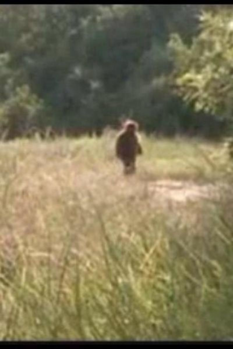 Baby Bigfoot?